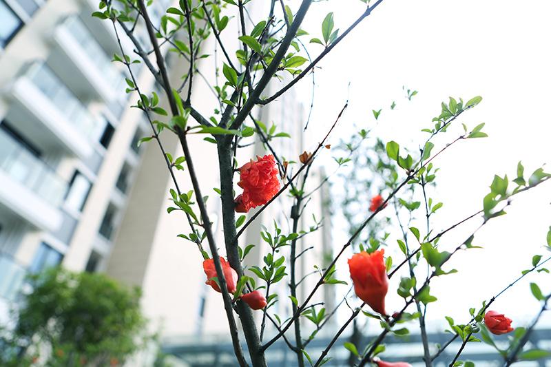 秋天的廠區.jpg