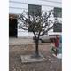 植物雕塑-29-S-897