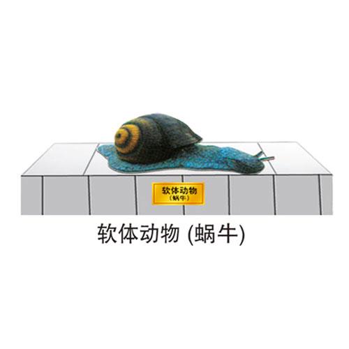 地理园系列 软体动物(蜗牛)