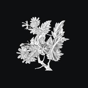 锡画 菊花 -菊花