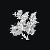 锡画 菊花-菊花